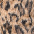 Leopard Print Jacket, Tan, swatch